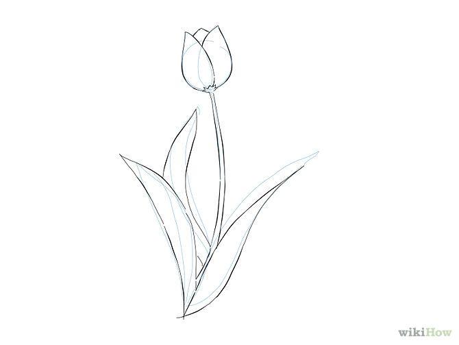 Simple Tulip Drawings | www.imgkid.com - The Image Kid Has It!