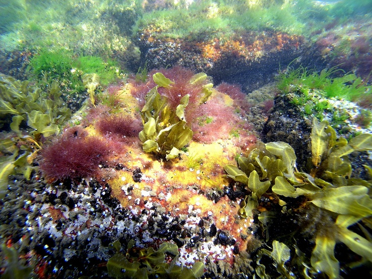 A historic vote in the European Parliament will lead to the creation of large scale of no-take zones in the seas, eventually having wilderness concept implemented in oceans and seas!    Photo: Archipelago National Park Archives
