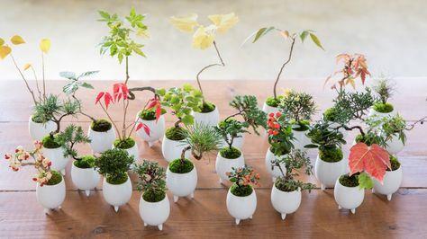 MICRO BONSAI(マイクロ盆栽) – 東京盆栽生活空間