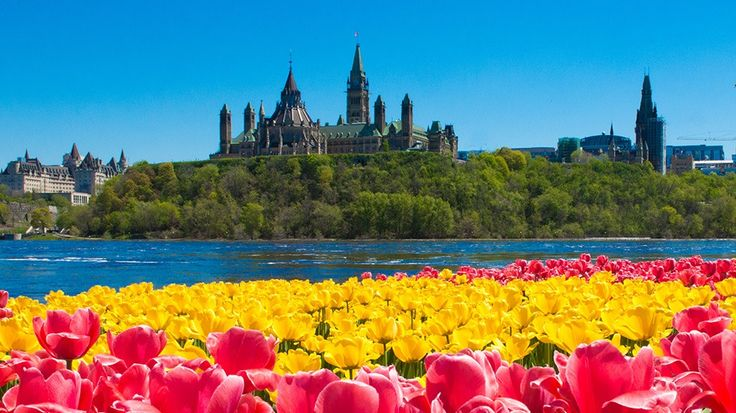 Canadian Tulip Festival - Ottawa