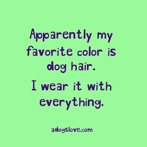What's your favourite colour?? https://www.facebook.com/ADogsLoveSite/photos/a.1386416911657906.1073741828.1379164385716492/1422228824743381/?type=3&theater