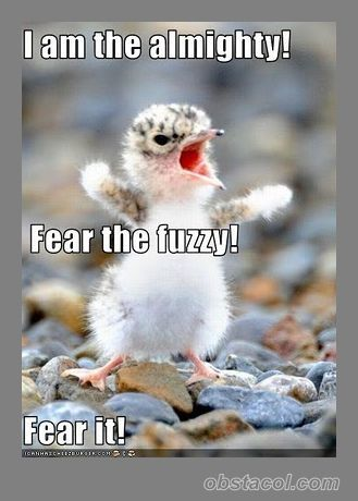 Google Image Result for http://obstacol.com/wp-content/uploads/2012/02/Fear-the-fuzzy.jpg