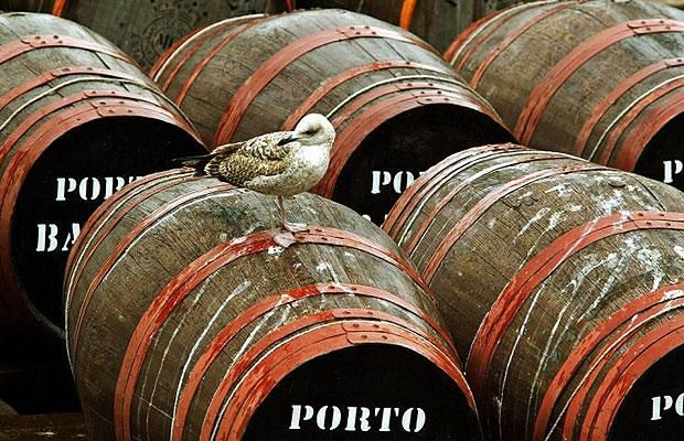 Humans aren't the only ones who love port