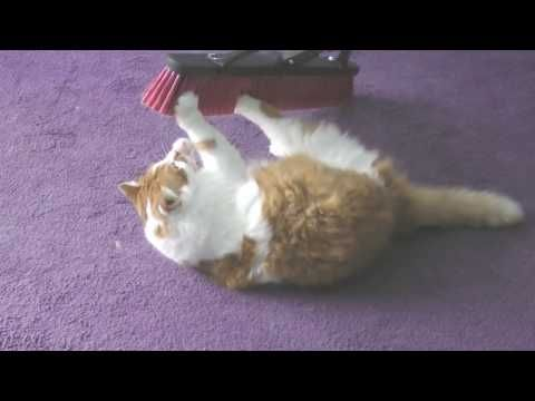 Funny cat videos 2016 - funny cat videos- try not to laugh - cat fails funny videos 2016 #4 - http://positivelifemagazine.com/funny-cat-videos-2016-funny-cat-videos-try-not-to-laugh-cat-fails-funny-videos-2016-4/ http://img.youtube.com/vi/ERL_NmcI9Hc/0.jpg  Funny cat videos 2016 – funny cat videos 2016 – you can't stop laughing [part 1]. funny cats compilation 2016 best funny cat videos ever – funny vines … ***Get your free domain and free site
