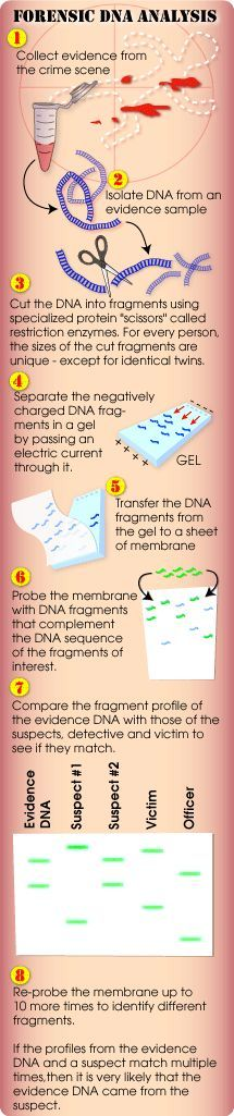 (gel electrophoresis) DNA analysis and comparison: