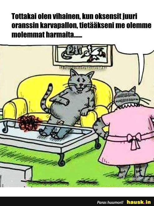 Hausk In Hauskat Kuvat Ja Vitsit Hyvalla Tuulella Joka Paiva Funny Comics Funny Cat Memes Funny Cartoons