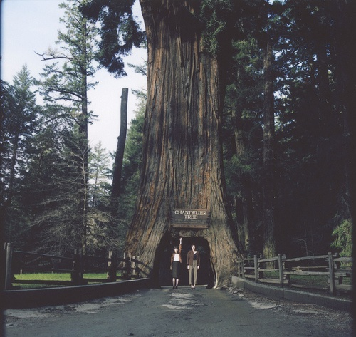 30 best Chandelier Tree images on Pinterest   Chandeliers, The ...