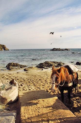 Chili, Valparaiso, Horcon