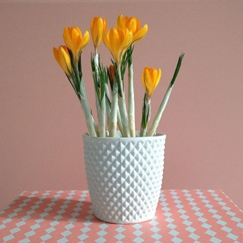http://cdn.shopify.com/s/files/1/0223/4111/products/Squares_Cup_01_-_Lenneke_Wispelwey_1024x1024.jpg?v=1417792785