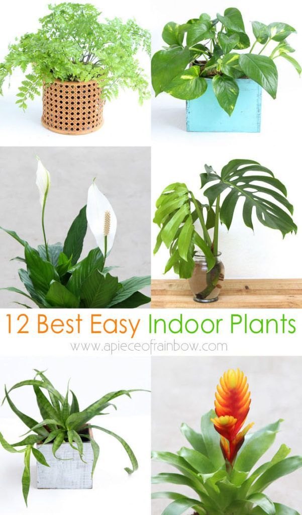 12 Best Air Purifying Indoor Plants You Won T Kill In 2020 Water Plants Indoor Indoor Air Purifying Plants Indoor Plants