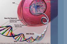 Frontal Lobe Dementia and genetics