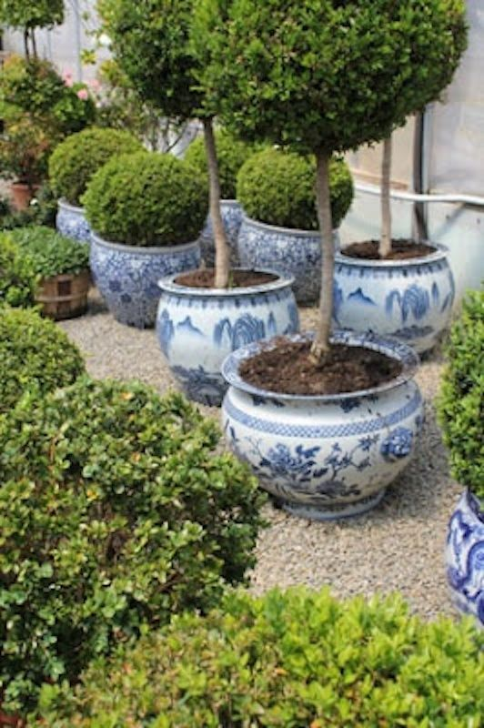 Topiary In Giant Blue And White Porcelain Planters 400 x 300
