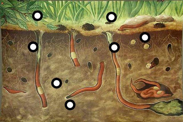 Regenwormen (filmpjes en een liedje) by Rianne Hofma
