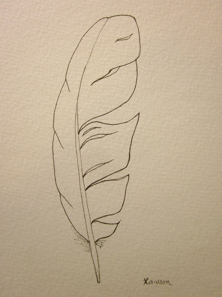 sea bird feather original ink drawing bird feathers