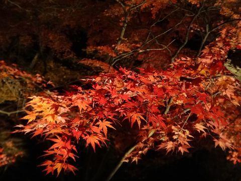ライトアップ紅葉も!秩父小鹿野温泉旅館「梁山泊」で日本の秋を満喫   埼玉県   Travel.jp[たびねす]