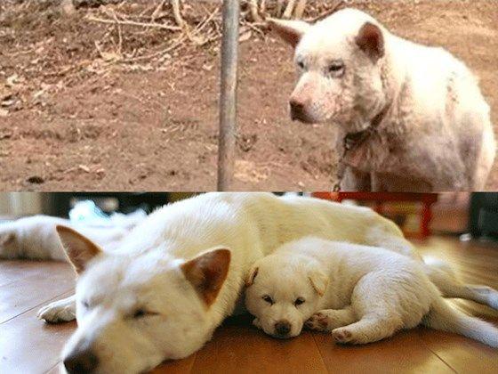 International adoption help?