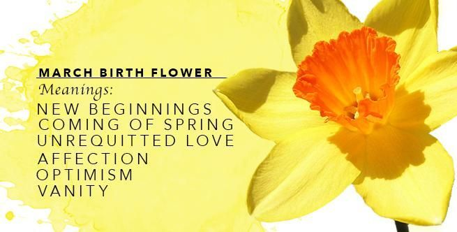 March S Birthflower Daffodils The Meanings Of March S Birthflower Daffodils Birthflower Clematis Daffodi In 2020 Birth Flowers Daffodils March Birth Flowers