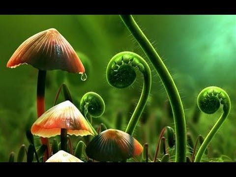 What Plants Talk About - Documentary