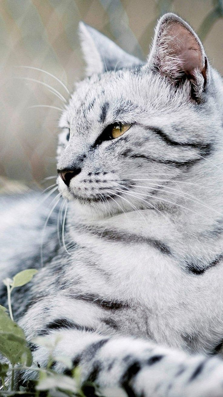 Animal samsung galaxy s5 wallpapers part 4 - Beautiful Cat Animal Galaxy S5 Wallpapers 92