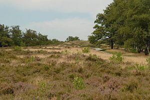 Welkom op de website van het Nationaal Park De Maasduinen