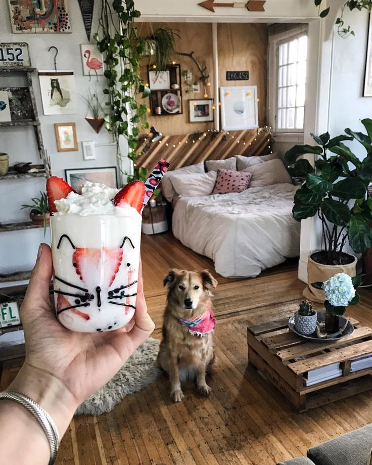 """It's friYAY! Eat dessert first day‍♀️"" Cat cup from Anthropologie. Living room and dog Stella"