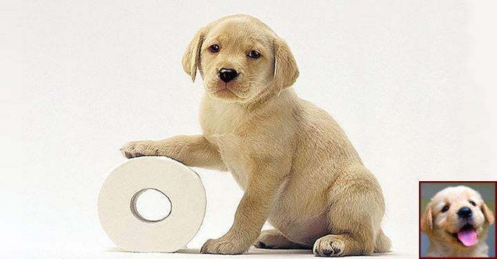 1 Have Dog Behavior Problems Learn About House Training A Puppy How Long Does It Take And C Potty Training Puppy Dog Training Obedience Puppy Toilet Training