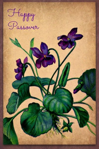 Photograph Passover Greeting Card violets by MYSAVIOR on Etsy.