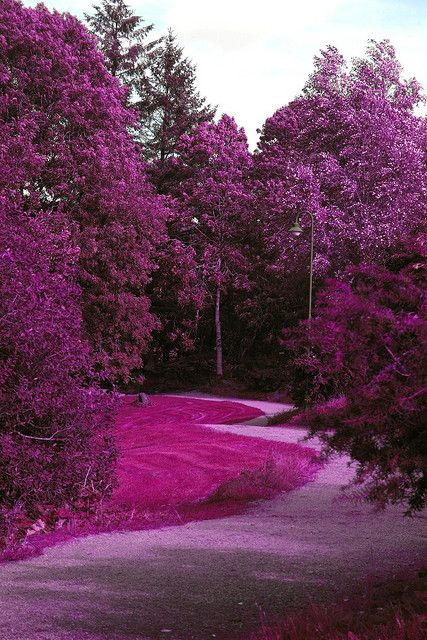 Forest Of Purple Flowers If This Is Real It Would Be My