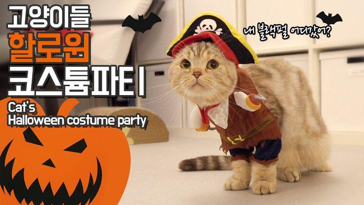 할로윈 특집! 고양이들 코스프레하다!! CAT'S HALLOWEEN COSTUME PARTY【수리노을 SURI&NOEL】