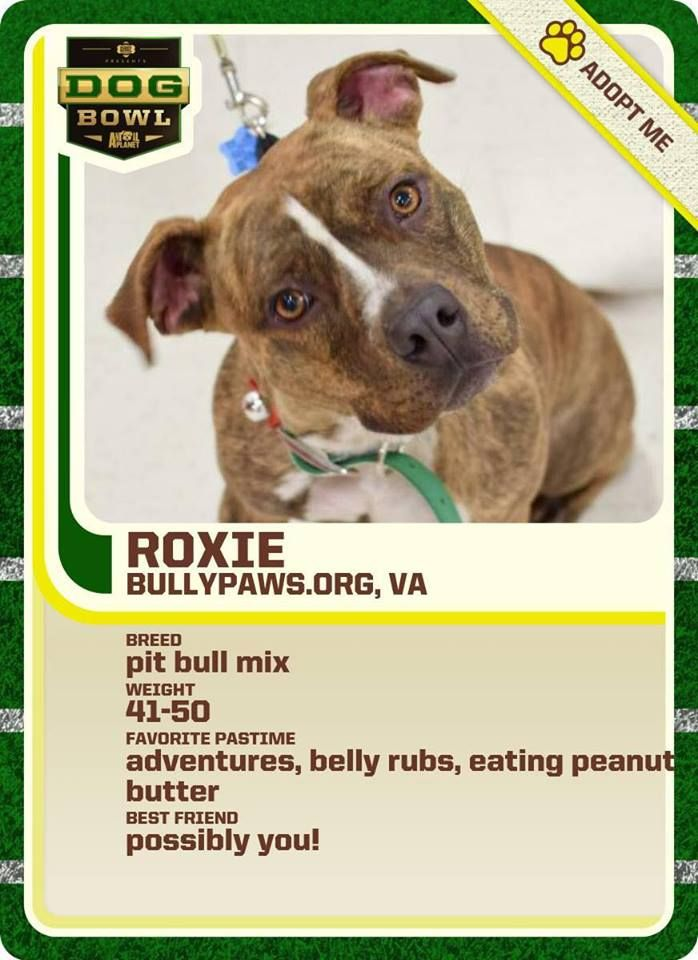 Bully Paws In Virginia Did A Great Job With This Sports Star Adoptable Card Pup Adoption Foster Puppies Dogs Pets