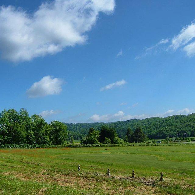 【miyaben.77】さんのInstagramをピンしています。 《北海道 士別にて 気分は最高!な風景だった🆙 パイロンちょいじゃま…笑 #北海道 #士別市 #北の大地 #大自然 #風景 #景色 #森 #青い空 #雲》