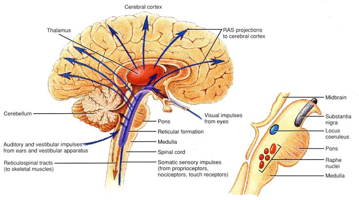 Within the Brain Stem, the structure called Reticular Formation is identical to Soul or Spirit  described in religious scriptures and philosophical writings. Description from wholedude.com. I searched for this on bing.com/images