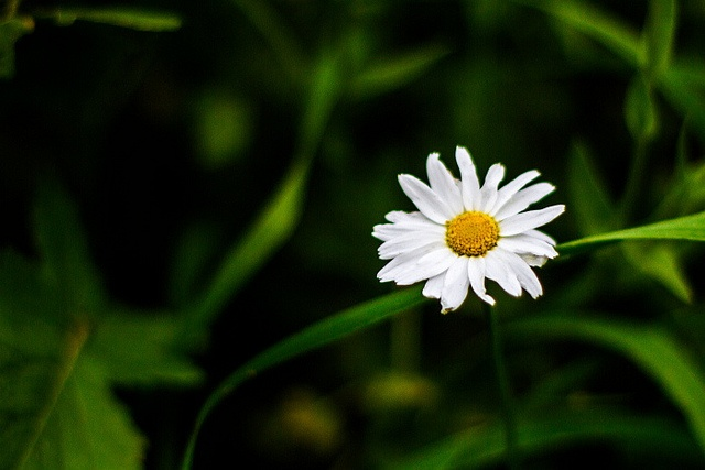47 / 52 Spring To Get Sprung by Dolkin, via Flickr