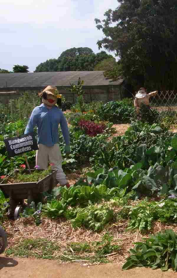 All clippings and prunings are dug into the trench between the rows and when the time comes to replant, the rich compost from the trench is dug back into the garden bed, ready to go with the new crop.  No delay.  I not only loved the veggies and flowers. But I love the scarecrows too.