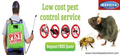 Your stay in Gurgaon or Dwarka can be troublesome, if you are avoiding the intrusions of rats, cockroaches and mosquitoes in your place.