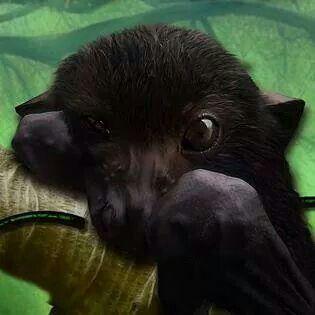 Sweet bat face!