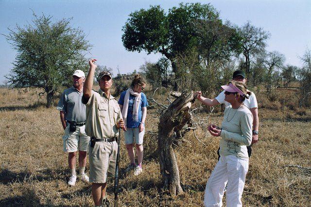 Tim Brown conducting a Safari Bush Walk