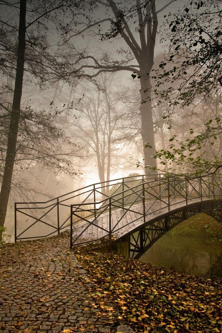 bluepueblo:  Forest Bridge, Pszczyna, Poland photo via misaki