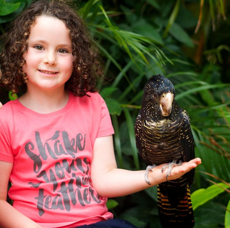 Shake Your Tail Feather design inspired by the Willy Wagtail's playful dance. Pictured here with one of Currumbin Wildlife Sanctuary's bird show stars.