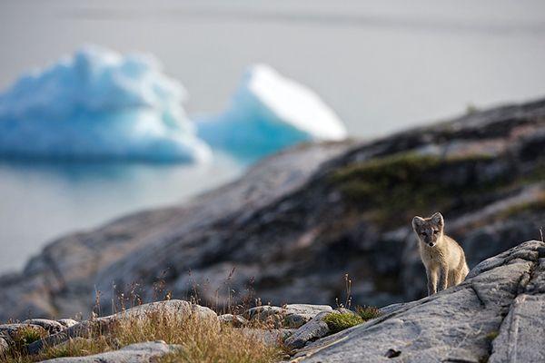 Что посмотреть в Гренландии? #Greenland
