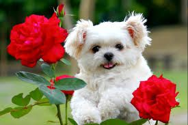 Image result for puppy with flowers in mouth QUOTES