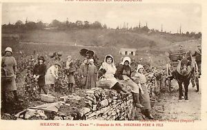 vintage sussex postcards   Détails sur BEAUNE (21) vendanges aux Cras domaine…