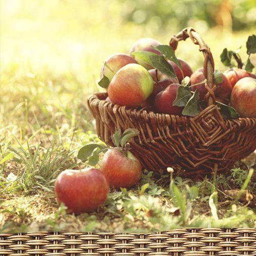 Culegerea si depozitarea fructelor de toamnă  http://www.raureni.ro/blog/culegerea-si-depozitarea-fructelor-de-toamna/