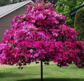 Petunia Tree Plans  http://www.thegreenery.ca/assets/uploads/documents/TheGreenery-petunia-tree.pdf