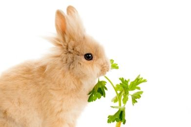 What Can Rabbits Eat?
