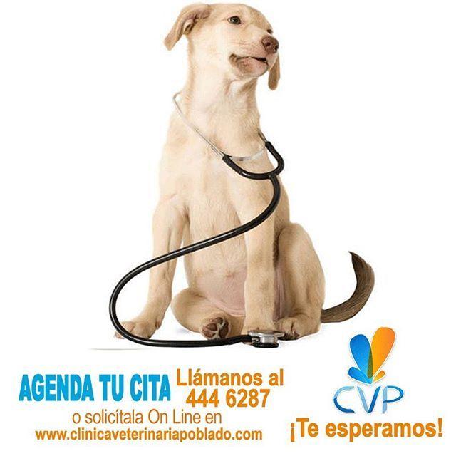Recuerda que hemos creado unos precios diferenciales con un descuento para aquellos que solicitan las citas con anterioridad al tel 4446287, a través de la página web http://clinicaveterinariapoblado.com/home/citas-online-cvp/ o escribiendo al correo: citas@clinicaveterinariapoblado.com  #ServiciosCVP  #Mascotas #CVP #PetLovers #Pets #Perros #Gatos #Dogs #Cats #Mascotagram #Petstagram #PetShop #DogLovers #CatLovers #NoAlMaltratoAnimal #LovePets #Instapet #ILoveMyPet #DogLife #Veterinaria