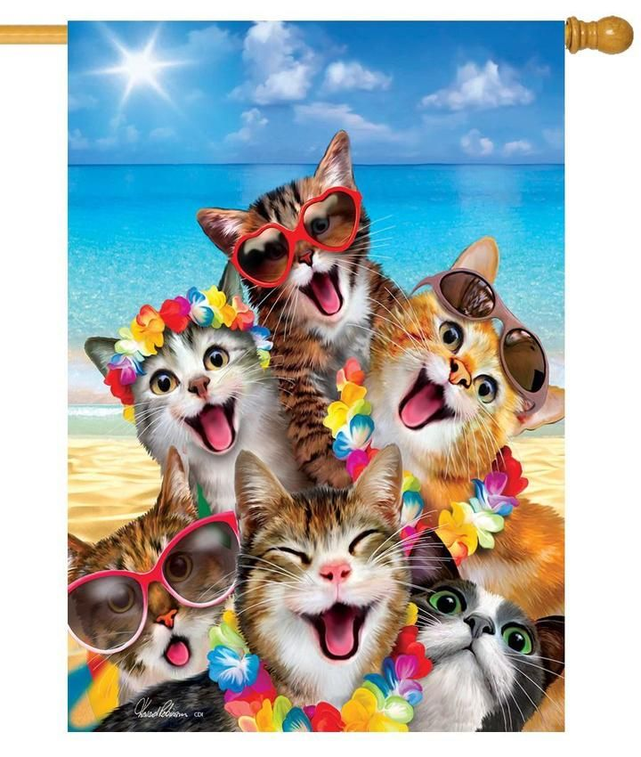 Cat Selfie On The Beach House Flag In 2020 Cat Garden Flag Cat Selfie Cute Beach Pictures