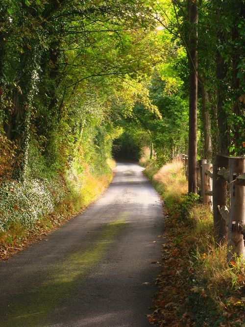 Tree Tunnel in Shoreham, Kent, England.   Photo via shays