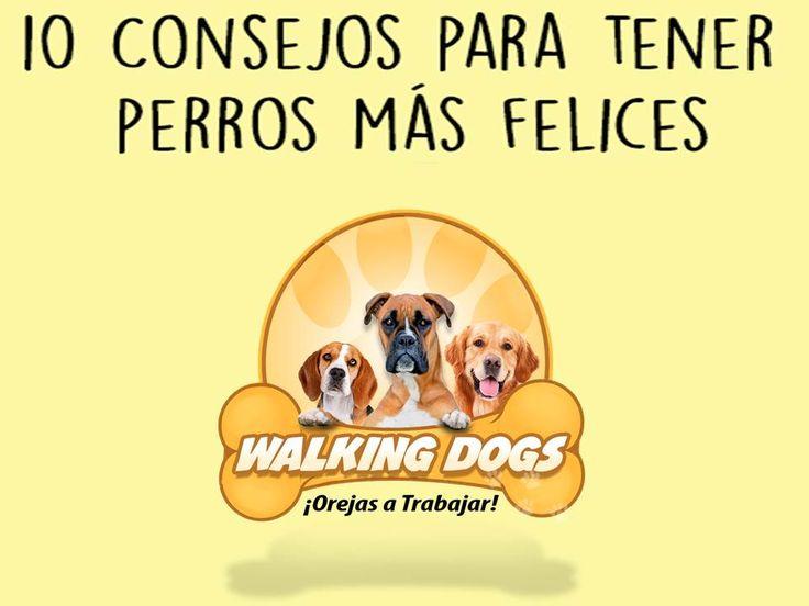 Que tu perro sea feliz depende de ti.