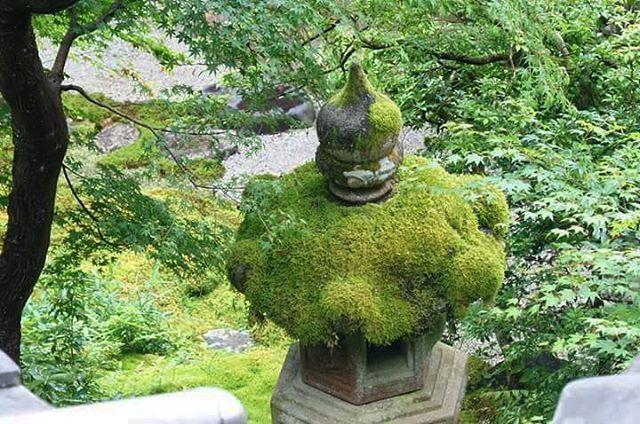 おはようございます!  今日は土曜日…  仕事終わったら、お昼寝しよかなー  ラーメンどこいった!?(笑)  ごんろくの、魚介とんこつ食べたいなー(笑)  #ファインダー越しの私の世界  #ig_nippon#ig_nihon#ig_japan#igersjp#icu_japan#loves_nippon #lovers_nippon#gf_japan#wu_japan#instaderby#bns_japan#東京カメラ部#team_jp_#team_jp_西  #たまねぎ#苔#コケ#緑 #青モミジ#KYOTO #京都#八瀬#瑠璃光院#寺社仏閣#京都寺社仏閣巡り #お寺になって数年目